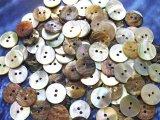 真珠の母貝 パールシェル アコヤ貝 15mm 100個