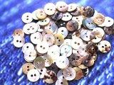 真珠の母貝 パールシェル アコヤ貝 10mm 100個