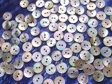 真珠の母貝 パールシェル アコヤ貝 13mm 100個