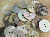 真珠の母貝 パールシェル アコヤ貝 23mm 25個