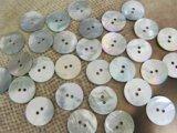 真珠の母貝 パールシェル アコヤ貝 20mm 30個