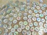 真珠の母貝 パールシェル アコヤ貝 11.5mm 100個